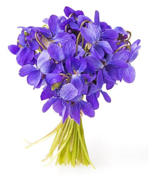 foto di fiori viole i fiori delle viole della primavera si chiudono su