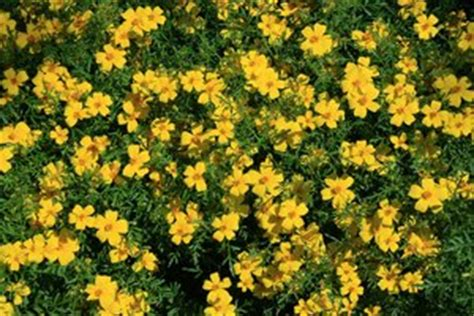 yellow garden flowers free stock photos rgbstock free stock images yellow