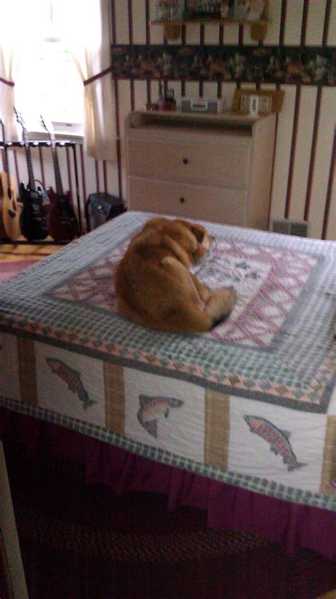 dogs sleeping in bedroom should dogs sleep in the bedroom life with dogs and puppies blog