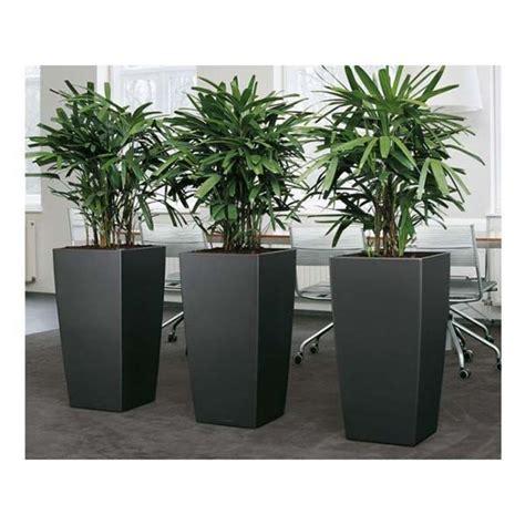 column planter plant jungle