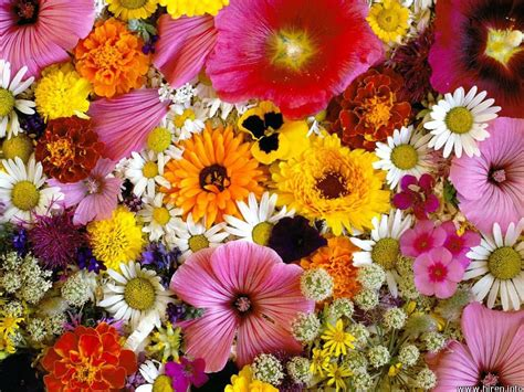image for flowers flowers beautiful flowers flower wallpapers flower and