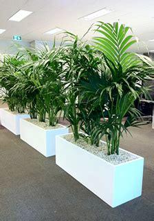 sydney indoor plant hire maintenance rent plants sydney