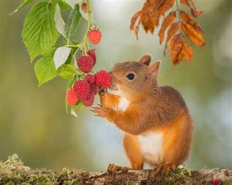 eat squirrels of food stock photo animal stock photo