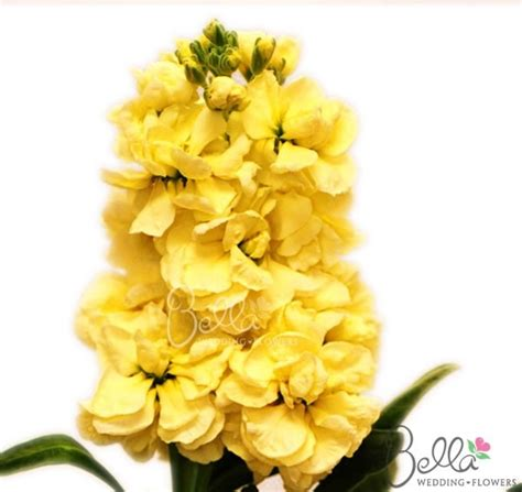 order flowers 35 best yellow wedding flowers images on
