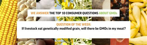 gmoanswers your questions on health and safety of gm food and crops gmoanswers your questions on health and safety of gm food and crops