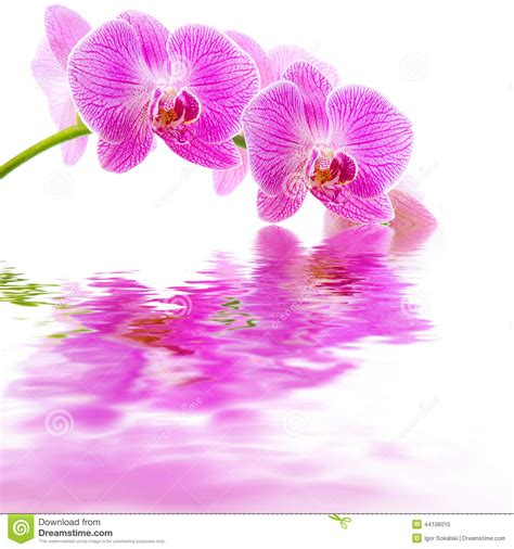 orchid blue water reflection flowers beautiful orchid pink orchid water reflection stock photo image 44106015