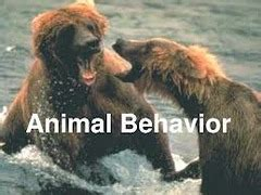 fixed action pattern quizlet animal behavior test study flashcards quizlet