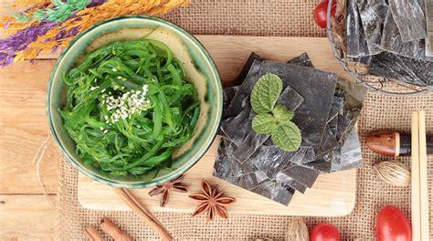 alghe cucina alghe in cucina e canapa alimentare nuove tendenze alimentari