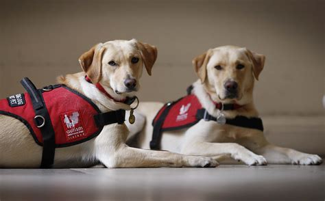 assistance dogs and we begin again roscommon v mayo mayoclub51