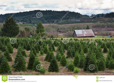 oregon christmas tree farm stock photo image of growing