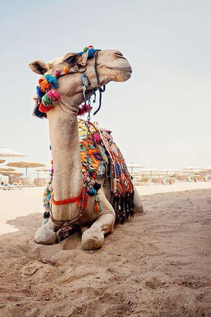 airbnb egypt sharm el sheikh egypt pinterest airbnb s top trending