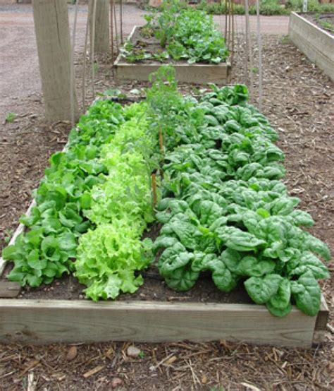 Garden Raised Beds Small Plot Plan The Old Farmer S Almanac Small Raised Vegetable Garden