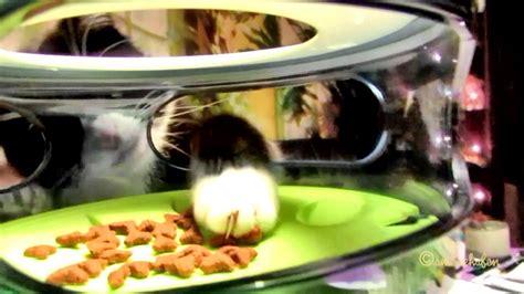 puzzle feeder catit food maze puzzle feeder 1st test futter labyrinth katze cat pet