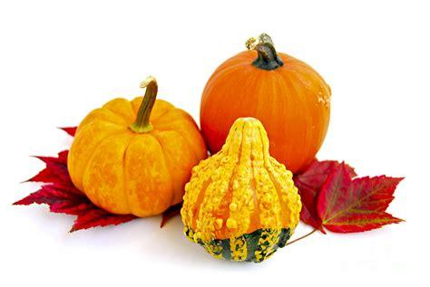 decorative pumpkins decorative pumpkins photograph by elisseeva