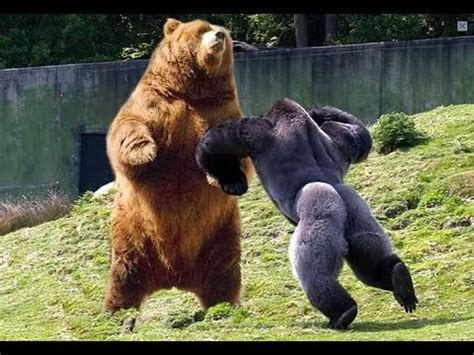 ver imagenes sorprendentes de animales reino animal 244 animales salvajes 2 youtube