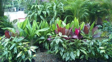 tropical planting scheme plant selection planting schemes