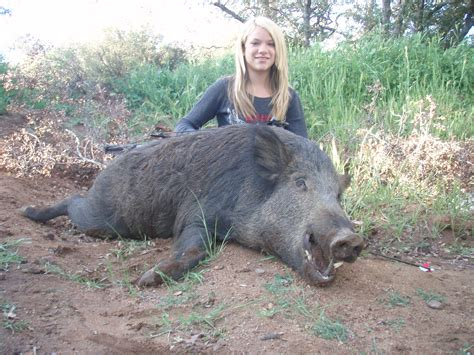 how to a to hunt hogs boar hog images