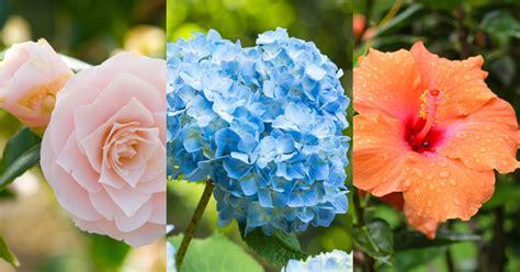 foto piante da giardino piante da giardino le variet 224 pi 249 donna moderna