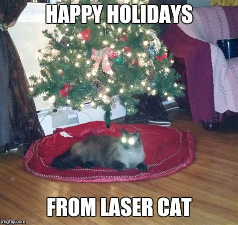 Laser Cat Meme - image tagged in laser imgflip