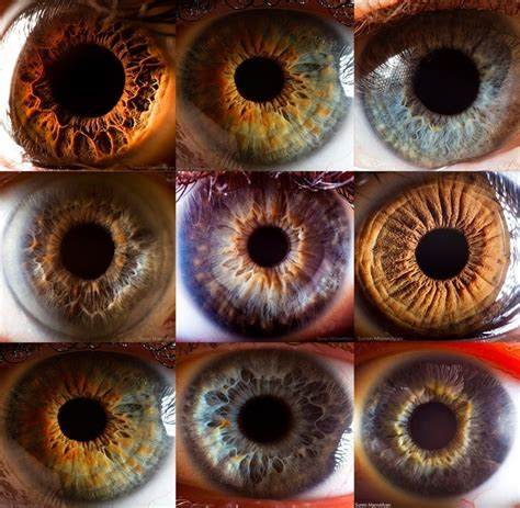 eye pattern pinterest eye pattern color analysis iridology color analysis pinterest