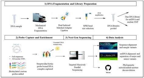 The Templates For Next Generation Sequencing Are Flash Card genes free text applications of probe capture