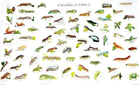 Caterpillars Identification Guide Picture And Images