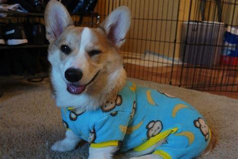 puppies in pajamas 10 puppies in pajamas