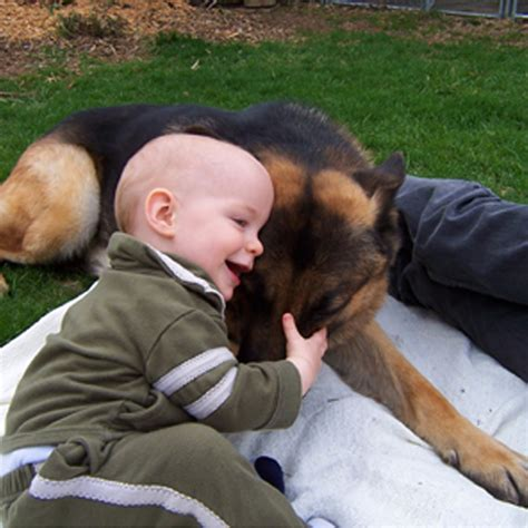 puppy and baby bringing home a new puppy german shepherd c