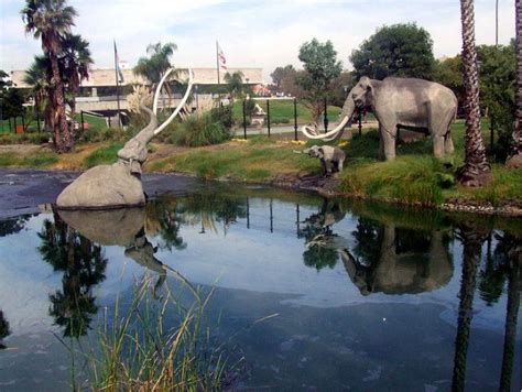 miss history travels to la tar pits museum books free entrance monday to la tar pits for 100th