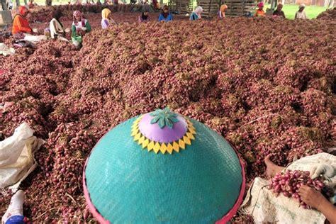 Benih Bawang Merah Impor satu harapan pemerintah jamin stok bawang merah cukup