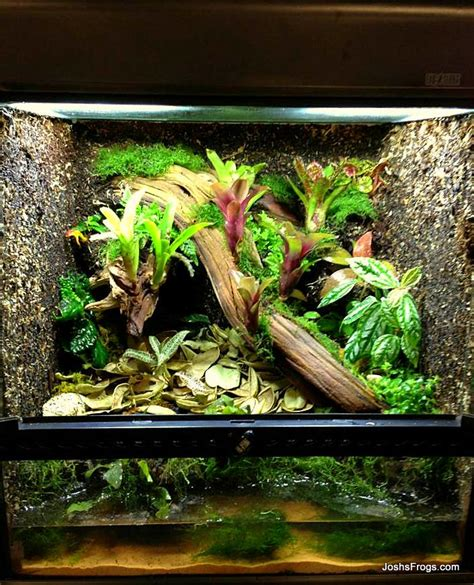 terrarium construction joshs frogs   guides