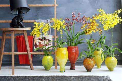 Die Schönsten Zimmer by Sch 246 Ne Zimmerpflanzen Die Sch 246 Nheit Der Oncidium Orchidee