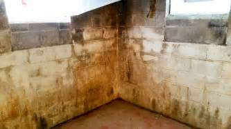 mold on basement walls how to remove mold angies list