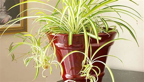 plants that need little sunlight indoor plants that need little sunlight bless my weeds