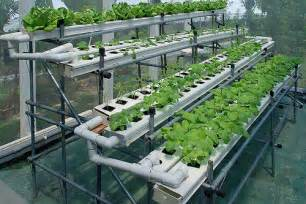 Homemade hydroponics system is easy for your home garden hydroponics