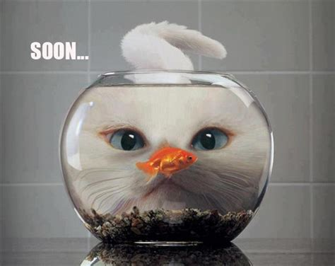 Cat Soon Meme - maybe soon i will have exciting things to share