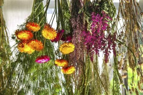 blumen trocknen blumenstr 228 u 223 e aus trockenblumen mein sch 246 ner garten