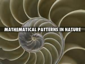 Mathematical Pattern In Nature | mathematical patterns in nature by laurenkomalley