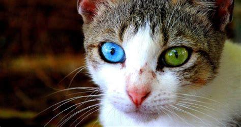 imagenes ojos de animales fotos de animales con ojos de distinto color
