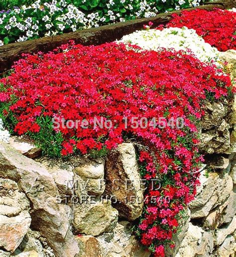 marseed 50 pcs fashion bright red rare flower plants