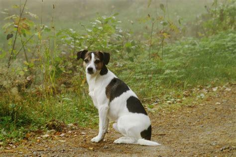 where did dogs come from where did dogs come from davidhgrimm