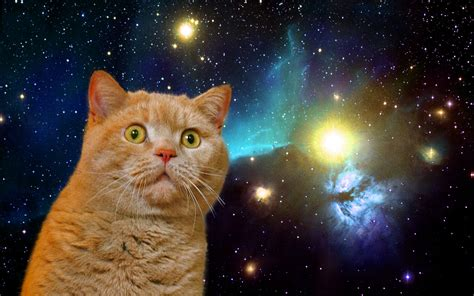 Cat In Space cats in space you come from there right meow