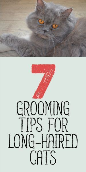 grooming tips 88 best images about cats dogs on