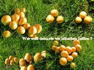 pilze garten herbst garten pilze