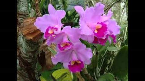 imagenes hermosas de orquideas imagenes de las mas hermosas orquideas youtube