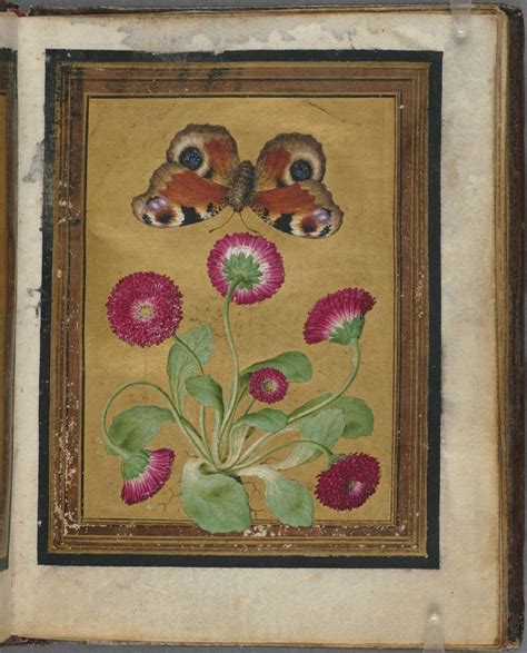 libro insects and flowers the 74 best images about jacques le moyne de morgues 1533 1588 on watercolour