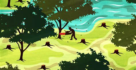 combating illegal logging deforestation