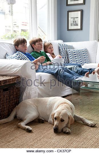 dog watching tv on couch dog watching tv stock photos dog watching tv stock