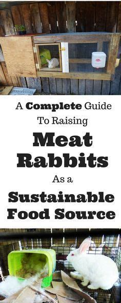 raising meat rabbits your backyard pinterest the world s catalog of ideas