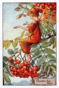 Wayside Flower - mountain ash flower fairy vintage print cicely mary